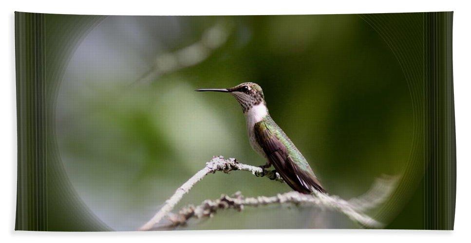 Hummingbird Beach Towel featuring the photograph Hummingbird - Bird by Travis Truelove