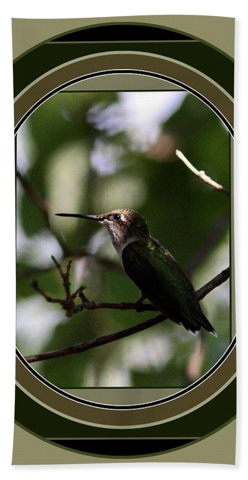 Hummingbird Beach Towel featuring the photograph Hummingbird - Card - Glint Of The Eye by Travis Truelove