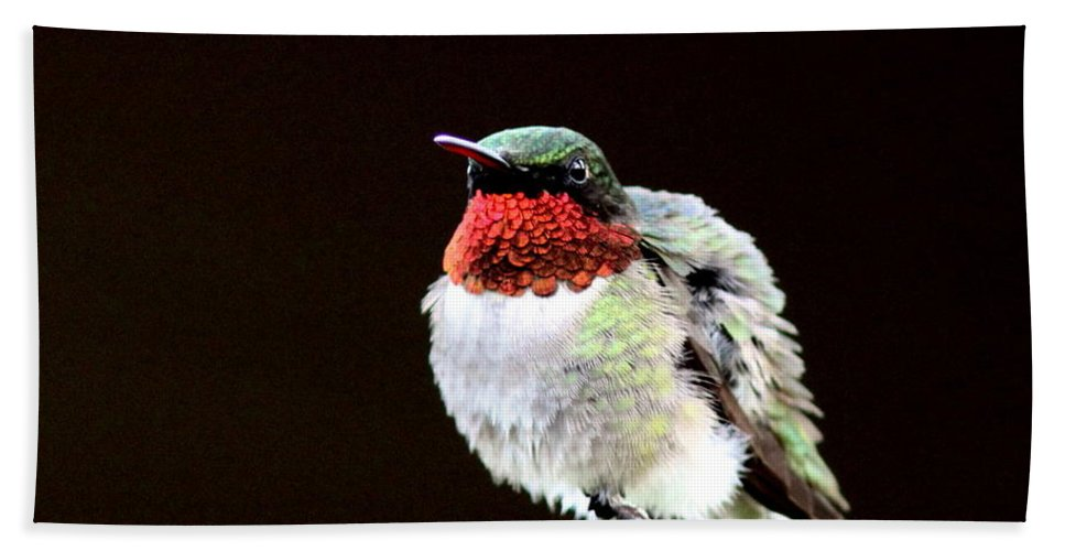 Hummingbird Beach Towel featuring the photograph Hummingbird - Ruffled Feathers by Travis Truelove
