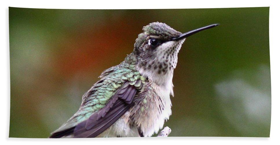 Hummingbird Beach Towel featuring the photograph Hummingbird - Little Friend by Travis Truelove