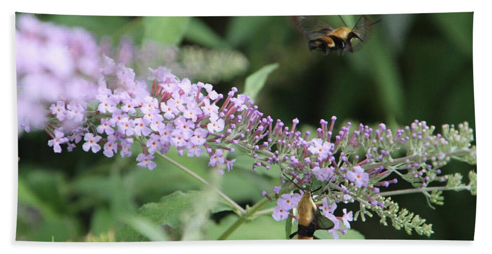 Insect Beach Towel featuring the photograph Hummingbird Moth by Ericamaxine Price