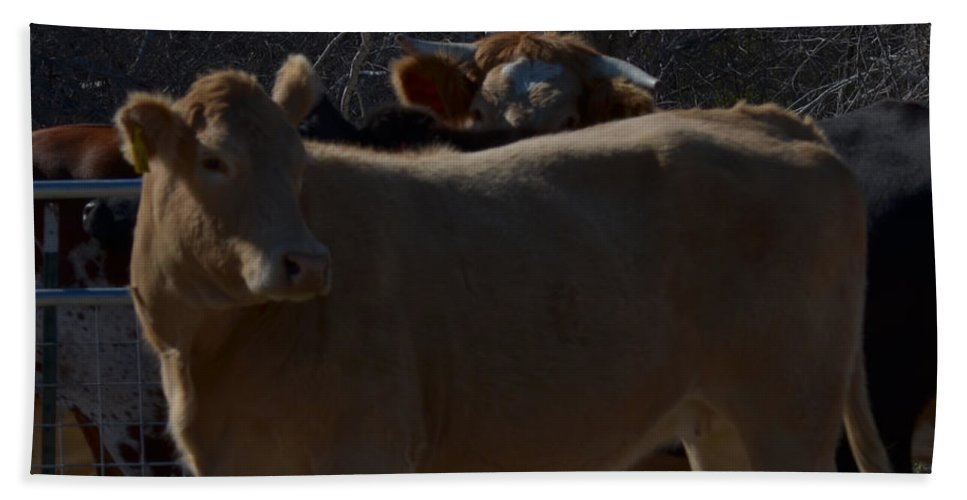 Animal Beach Towel featuring the photograph I Am Beautiful by Donna Brown