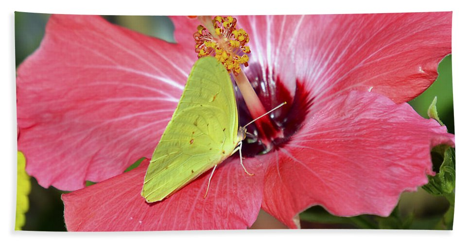 Hibiscus Flower Beach Towel featuring the photograph I Love My Hibiscus by TJ Baccari