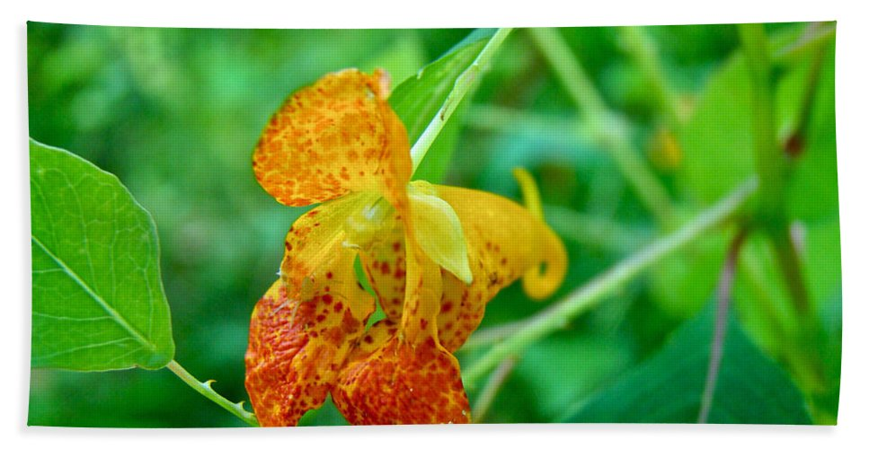 Jewelweed Beach Towel featuring the photograph Impatiens Capensis - Orange Spotted Jewelweed by Mother Nature