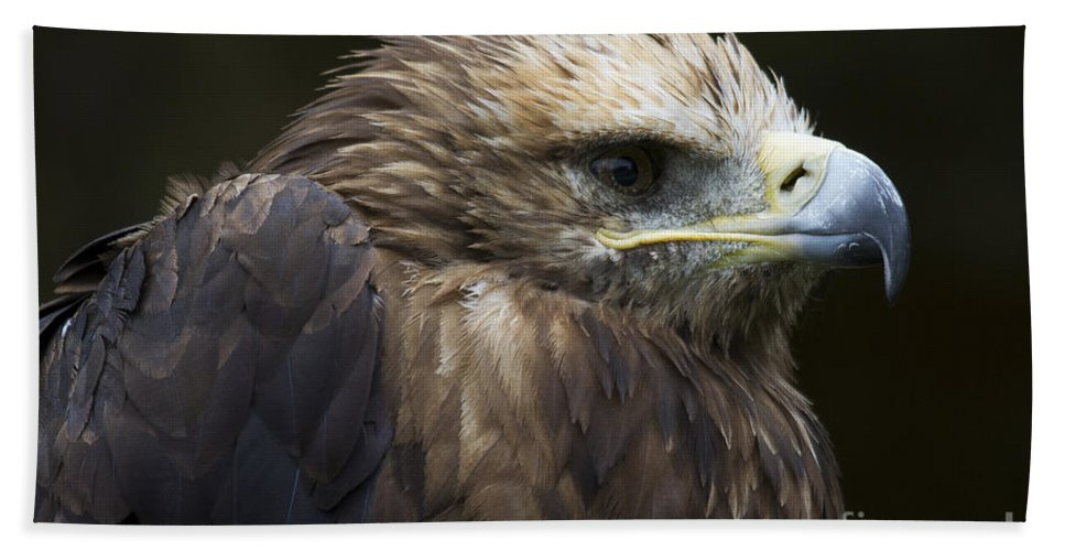 Heiko Beach Towel featuring the photograph Imperial Eagle 4 by Heiko Koehrer-Wagner