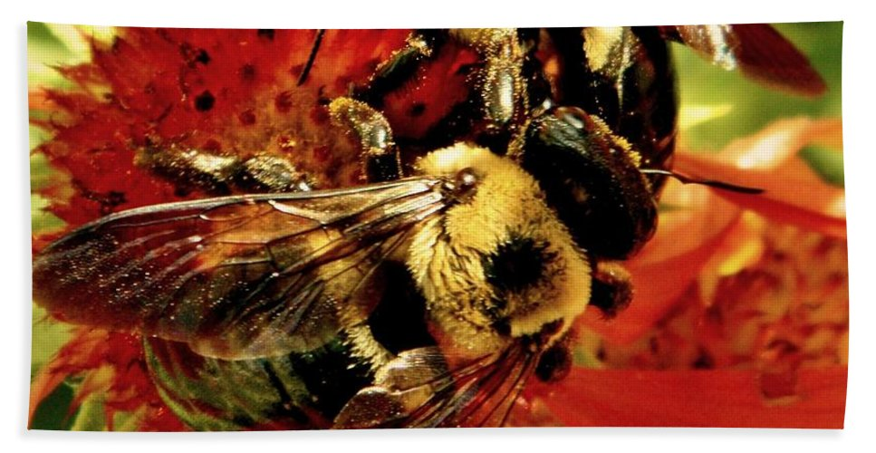 Earthy Beach Towel featuring the photograph In It Together by Chris Berry