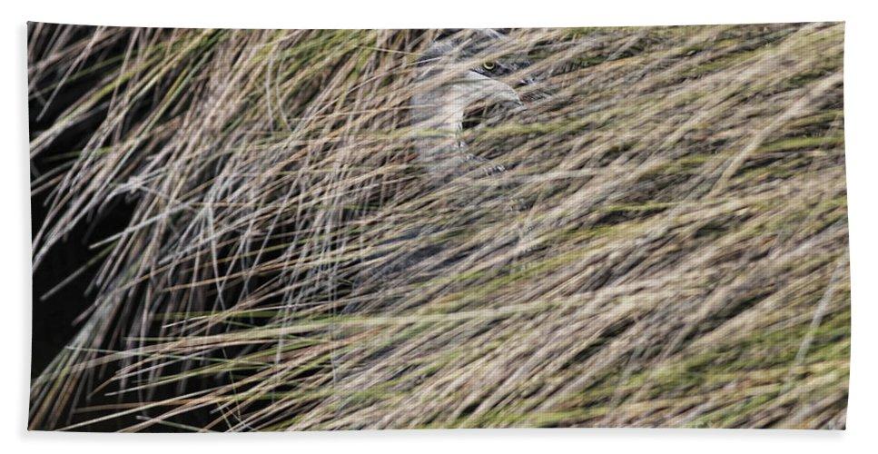 Heron Beach Towel featuring the photograph In The Grass by Deborah Benoit