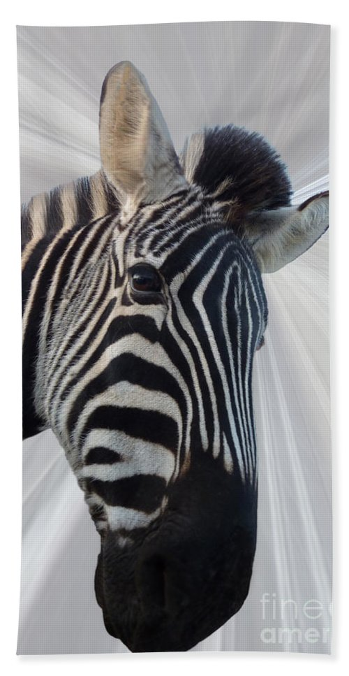 Zebra Beach Towel featuring the photograph Inquisitive by Sheila Laurens