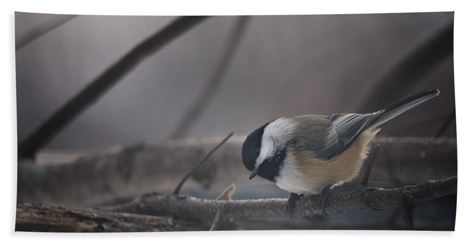 Chickadee Beach Towel featuring the photograph Inquisitive by Susan Capuano