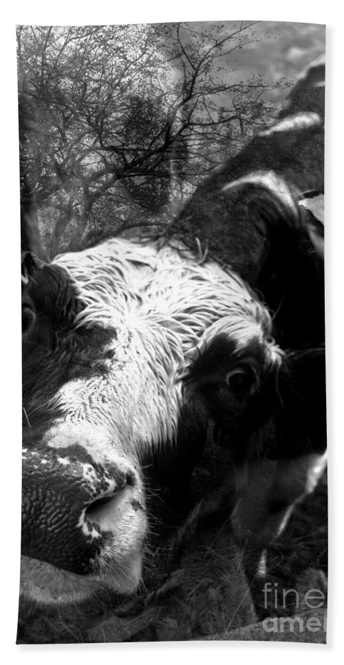 Agriculture Greeting Cards Beach Towel featuring the photograph Inquisitive Zoey With Ellamay by Danielle Summa