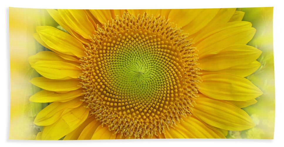 Sunflower Beach Towel featuring the photograph Intense Yellow by Ian MacDonald