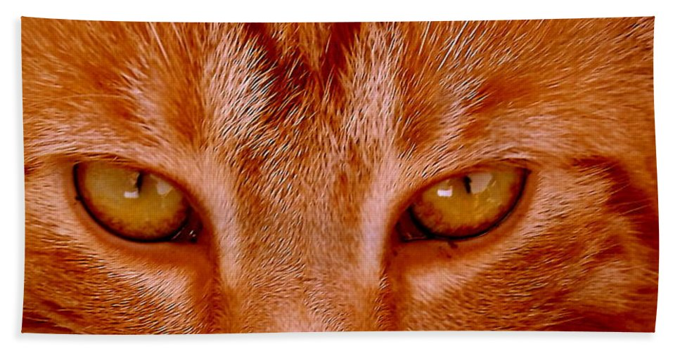 Cat Beach Towel featuring the photograph Intent by Shelley Blair