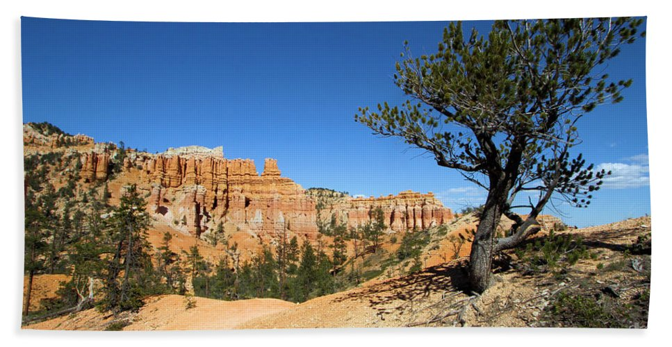 Bryce Canyon National Park Beach Towel featuring the photograph Isloation by Adam Jewell