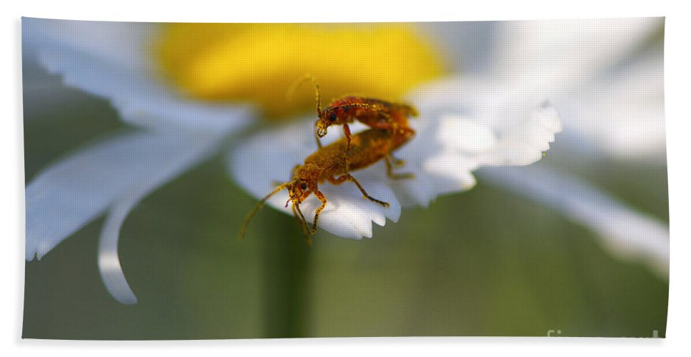 Bugs Beach Towel featuring the photograph It Takes Two by Sharon Talson