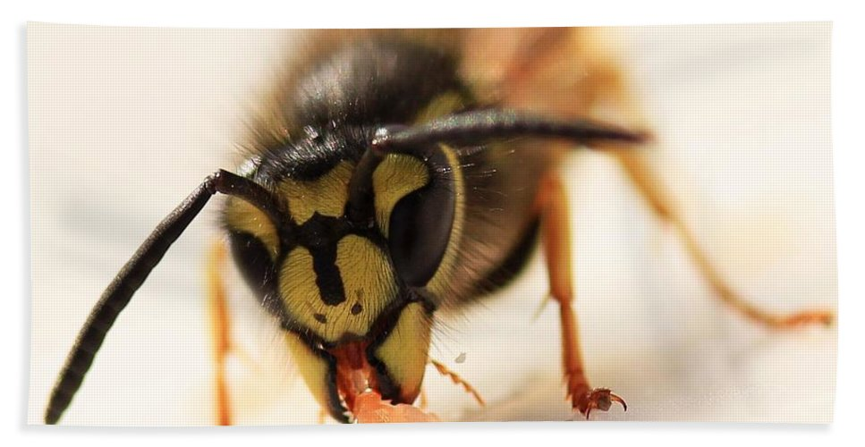 Amy Whimsicalworks Beach Towel featuring the photograph Jammy Wasp by AMY Whimsicalworks