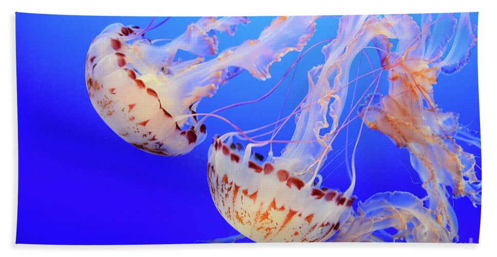 Jellyfish Beach Towel featuring the photograph Jellyfish 3 by Bob Christopher