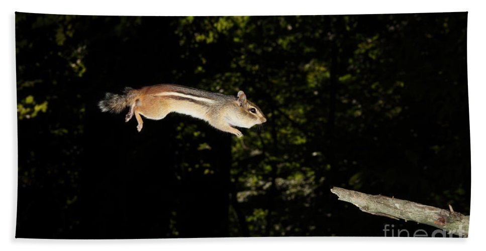 Eastern Chipmunk Beach Towel featuring the photograph Jumping Chipmunk by Ted Kinsman