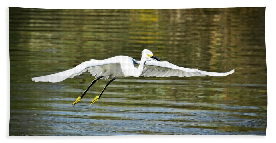 Snowy Egret Beach Towel featuring the photograph Just Soar by Saija Lehtonen