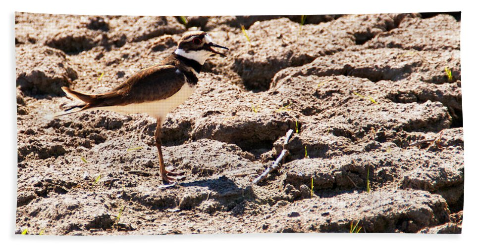 Wildlife Beach Towel featuring the photograph Killdeer Pitching A Fit by Edward Peterson