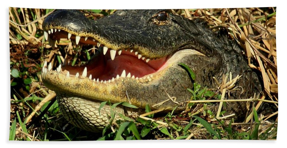 Gator Beach Towel featuring the photograph King Of The Swamp by Myrna Bradshaw