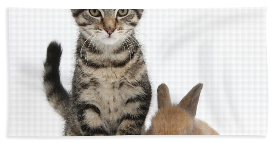 Nature Beach Towel featuring the photograph Kitten And Rabbit by Mark Taylor