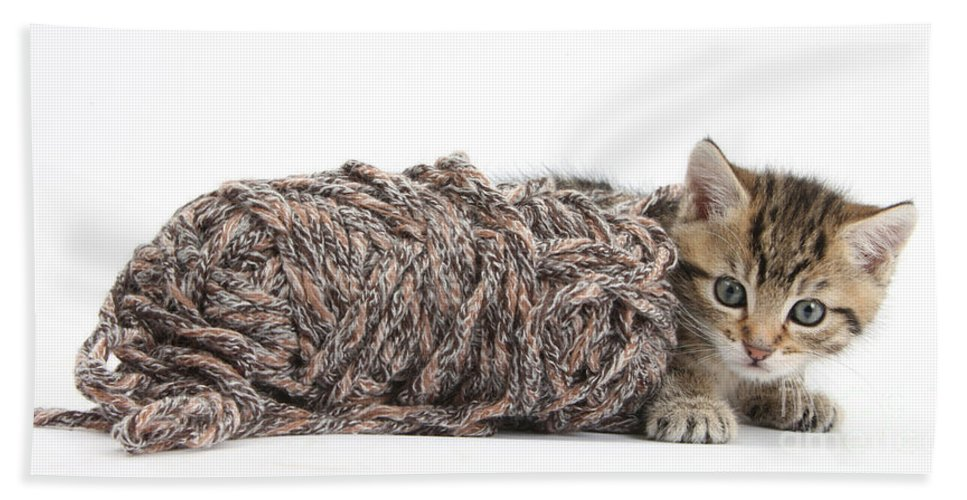 Nature Beach Towel featuring the photograph Kitten With Yarn by Mark Taylor