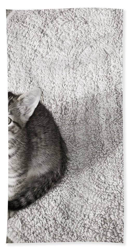 Kitty Beach Towel featuring the photograph Kitty's Shadow by Trish Tritz