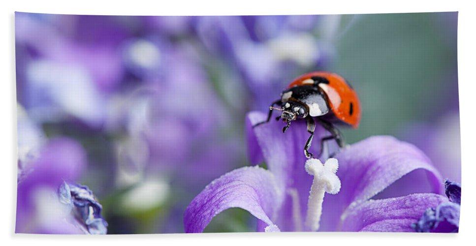 Ladybug Beach Towel featuring the photograph Ladybug And Bellflowers by Nailia Schwarz