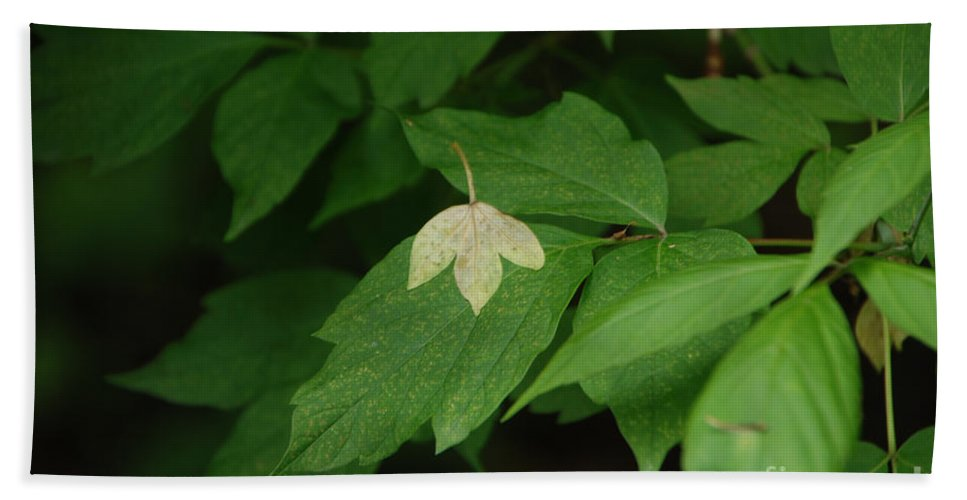 Leaf Beach Towel featuring the photograph Leaf On Leaf by Grace Grogan