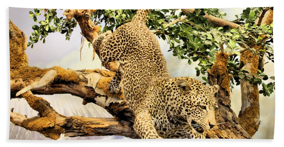 Leopard Beach Towel featuring the photograph Leaping Leopard by Kristin Elmquist