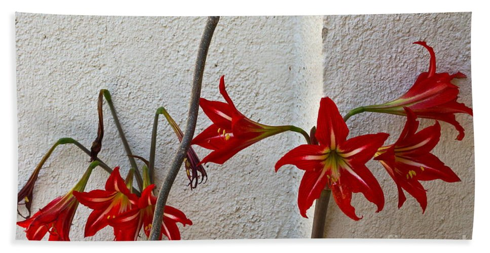 Red Amaryllis Beach Towel featuring the photograph Life Goes On by Byron Varvarigos