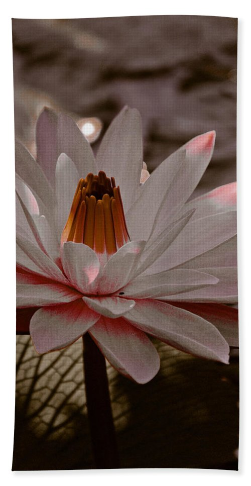Lily Beach Towel featuring the photograph Lil Peachy by Trish Tritz