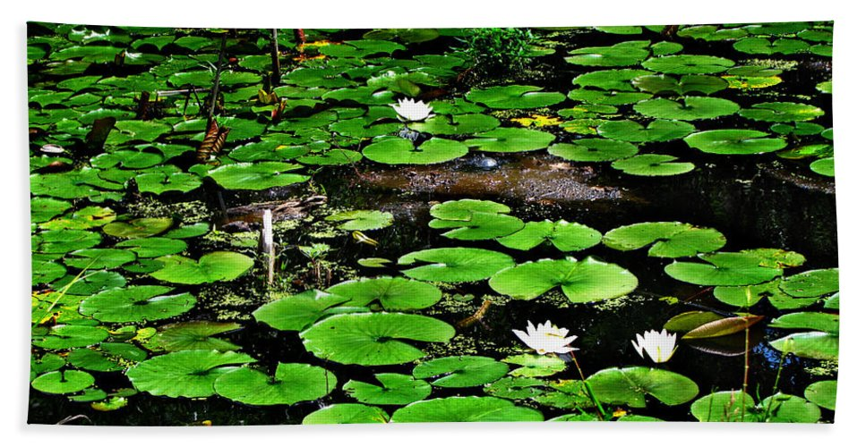 Water Lily Beach Towel featuring the photograph Lily Pad Turtle Camo by Ms Judi