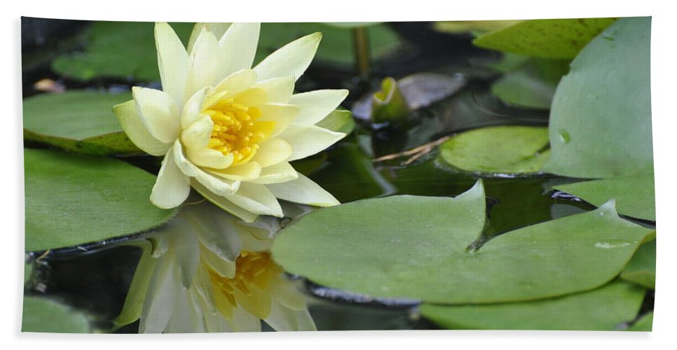 Water Lily Reflection Print Beach Towel featuring the photograph Lily Reflected by Deborah M Rinaldi
