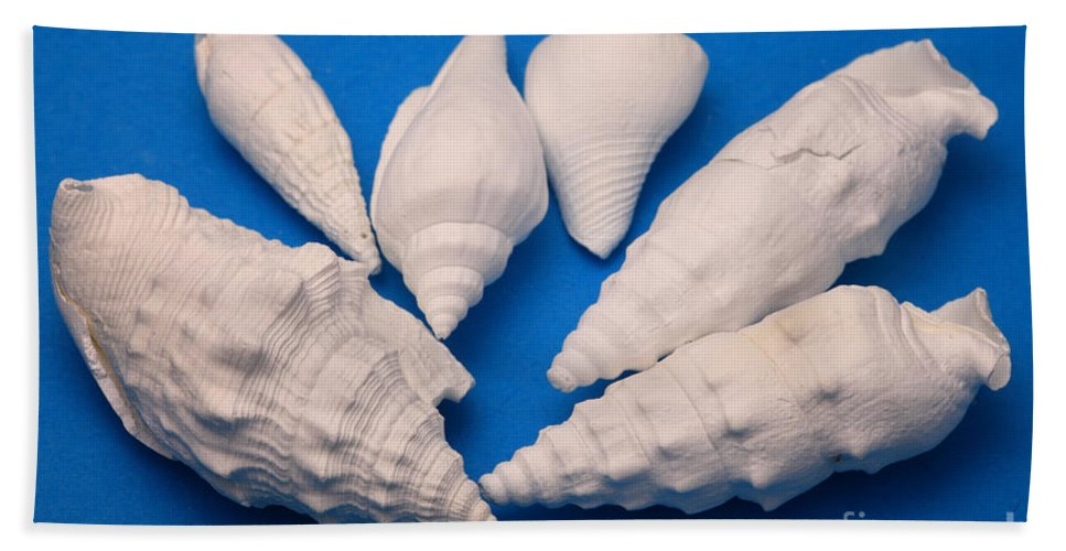Science Beach Towel featuring the photograph Lime Made From Seashells by Ted Kinsman