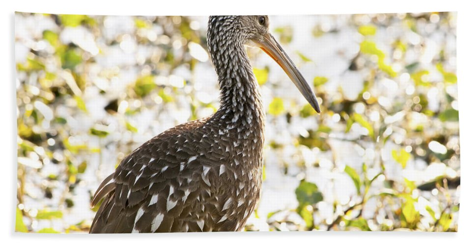 Limpkin Beach Towel featuring the photograph Limpkin Luster by Steven Sparks