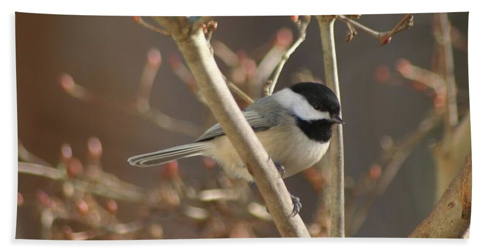Birds Beach Towel featuring the photograph Little One by Living Color Photography Lorraine Lynch