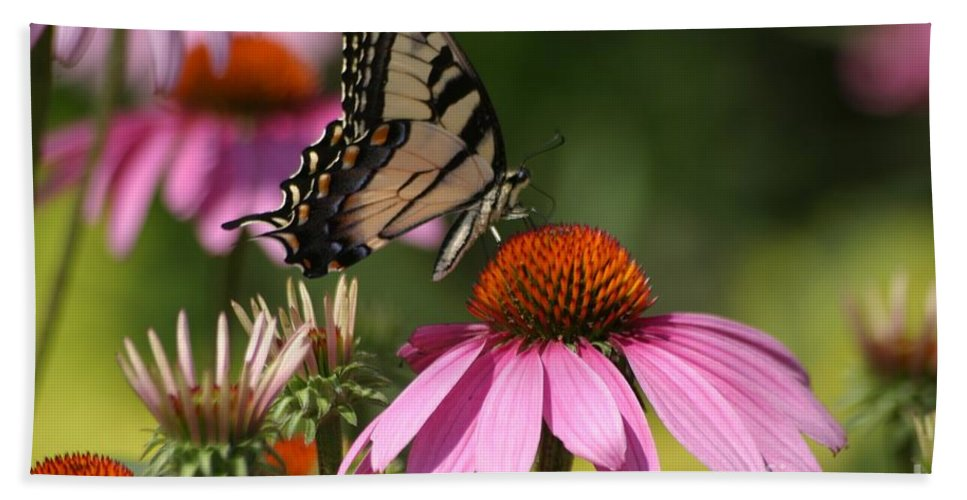 Butterfly Beach Towel featuring the photograph Living Color by Living Color Photography Lorraine Lynch
