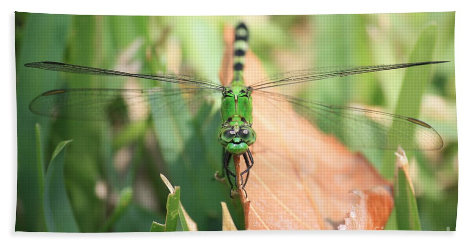 Green Dragonfly Beach Towel featuring the photograph Living On The Edge by Carol Groenen