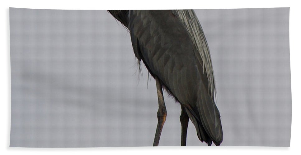 Beach Towel featuring the photograph Living On The Edge by Jenny Gandert