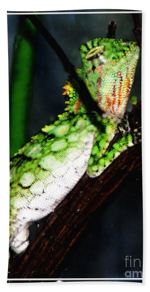 Lizard Beach Towel featuring the photograph Lizard With Oil Painting Effect by Rose Santuci-Sofranko