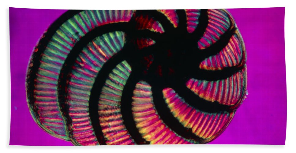 Foraminifera Beach Towel featuring the photograph Lm Of Peneroplis Pertusus, A Shelled by Eric Grave