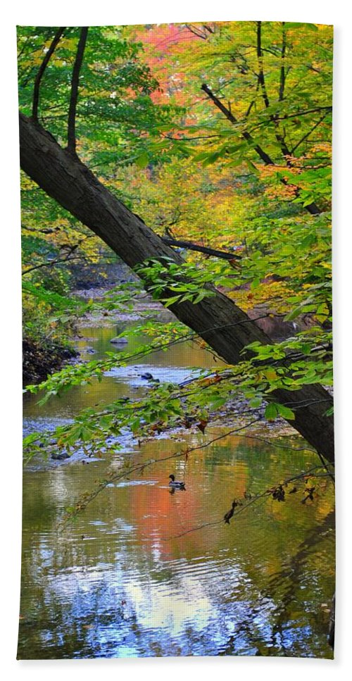 Landscape Beach Towel featuring the photograph Lone Duck by Frozen in Time Fine Art Photography