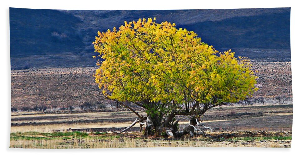 Tree Beach Towel featuring the photograph Lonesome by Robert Bales