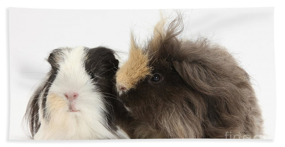 Nature Beach Towel featuring the photograph Long-haired Guinea Pigs by Mark Taylor