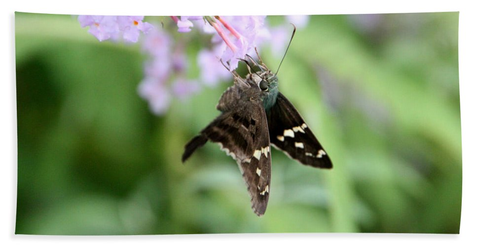 Long Tailed Skipper Beach Towel featuring the photograph Long Tailed Skipper - Urbanus Proteus by Ericamaxine Price
