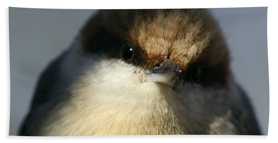 Brown-headed Nuthatch Beach Towel featuring the photograph Looking Fuzzy by Travis Truelove