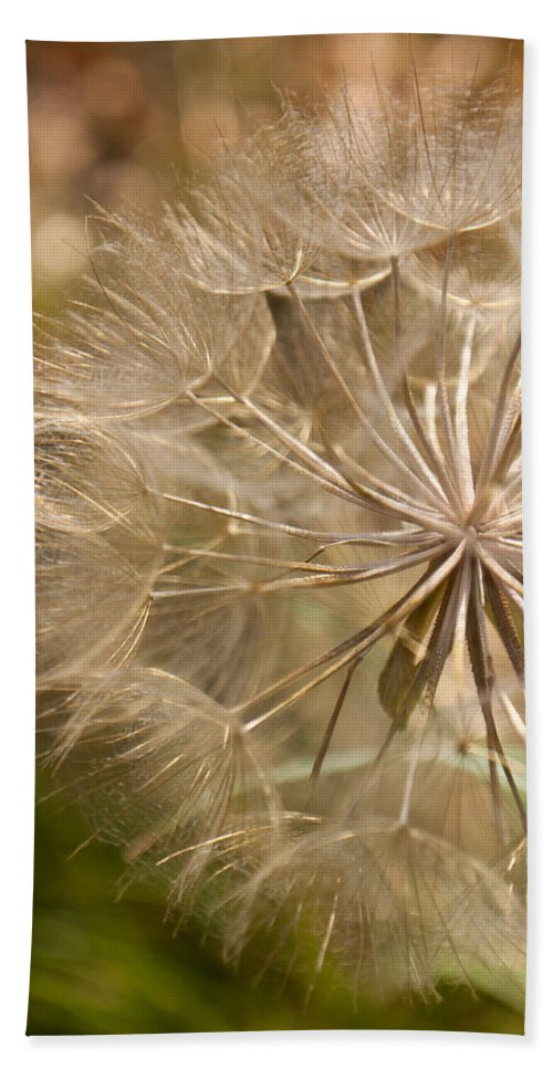 Flower Beach Towel featuring the photograph Lots Of Wishes by Lauri Novak