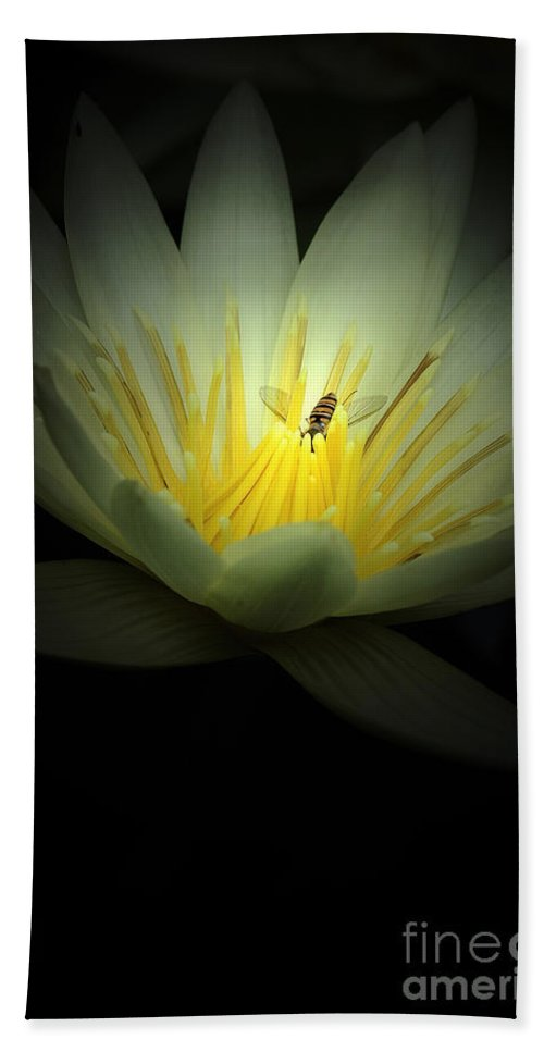 Lotus Beach Towel featuring the photograph Lotus Blossom And Bee by Mike Nellums