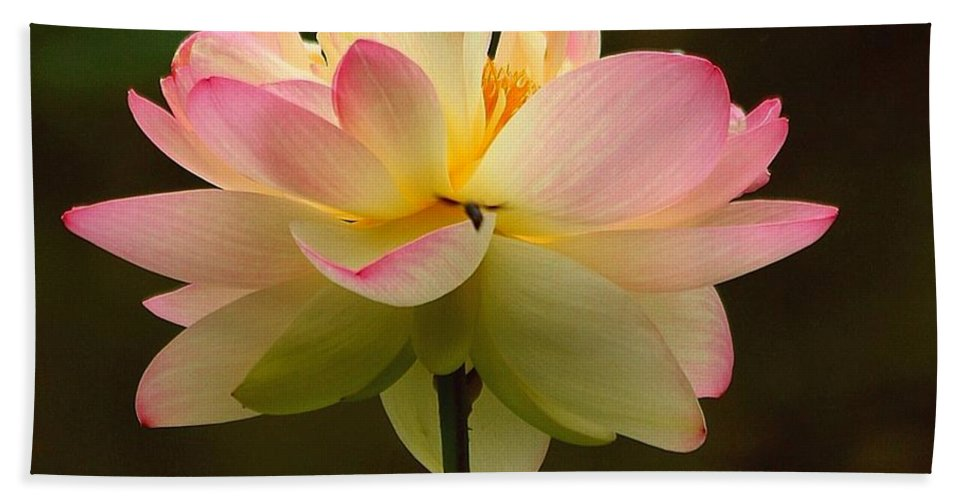 Lotus Beach Towel featuring the photograph Lotus In The Dark Water by Myrna Bradshaw